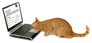 cat looking at a laptop