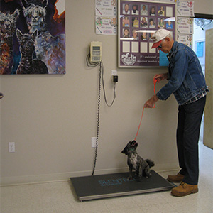 all dogs are weighed in the reception area