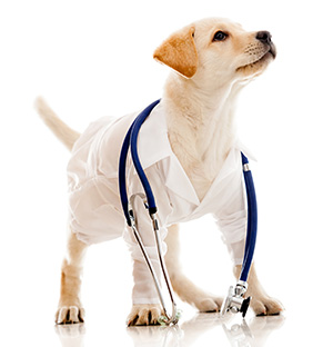 protect your pets with health care insurance