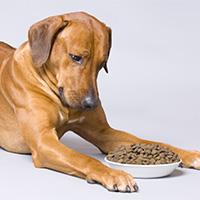 dog examining food